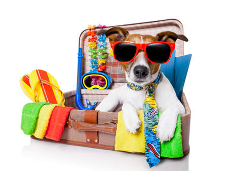 holiday: verano del perro de las vacaciones en bolsa llena de artículos navideños Foto de archivo