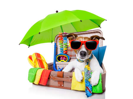 summer vacation dog in bag full of holiday items photo
