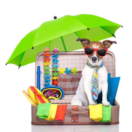 cestování: letní prázdniny pes v taškou plnou dovolenou položek