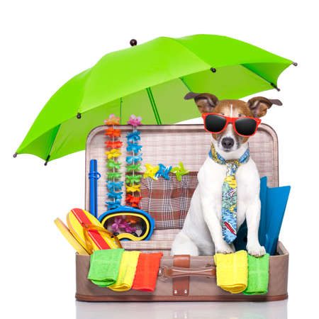 case: verano del perro de las vacaciones en bolsa llena de artículos navideños Foto de archivo
