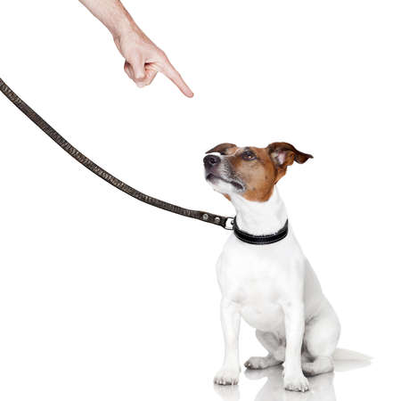 behaviour: bad behavior dog being punished by owner Stock Photo