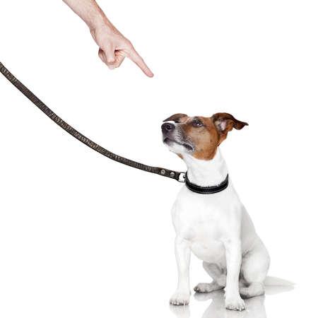 behavior: mal comportamiento del perro es castigado por el propietario Foto de archivo
