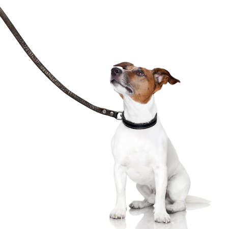 dog on leash: mal comportamiento del perro es castigado por el propietario Foto de archivo