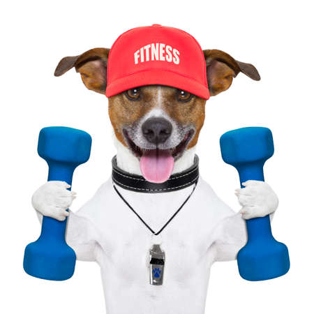 athlete: personal trainer dog with blue dumbbells and red cap Stock Photo