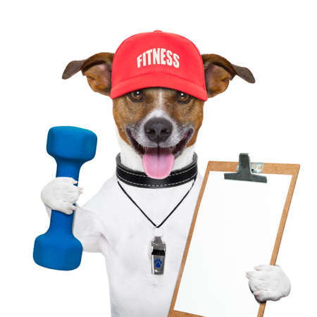 gym: personal trainer dog with blue dumbbells and red cap Stock Photo
