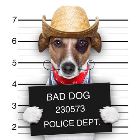 mugshot of a mexican very bad dog photo
