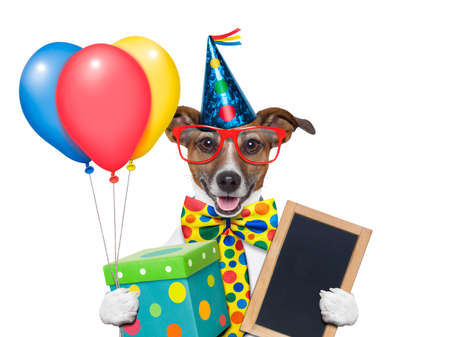 birthday dog with balloons and a big present photo