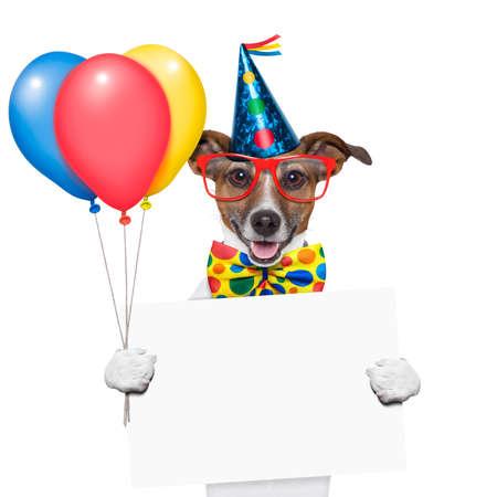 verjaardag hond met ballonnen en een witte plakkaat