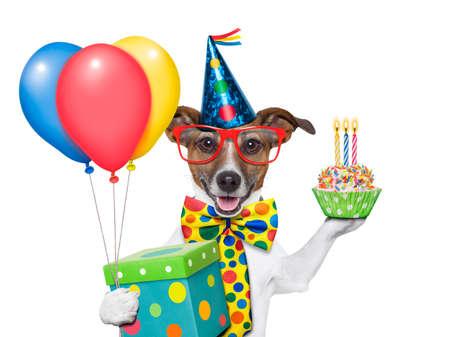 verjaardag hond met ballonnen en een cupcake
