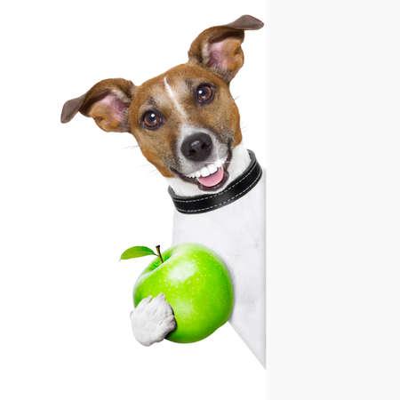 grappige honden: gezonde hond met een grote glimlach en een groene appel achter banner