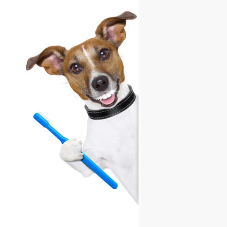floss: dog with big white teeth with  a toothbrush behind banner placard
