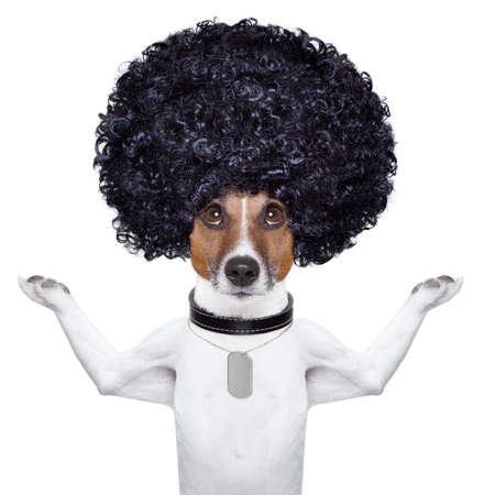 goofy: afro look dog with very big curly black hair