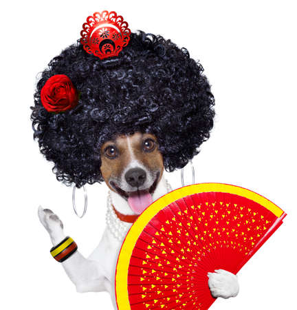 spaniard: spanish flamenco dog with very big curly hair and hand fan