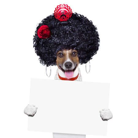 spaniard: spanish flamenco dog with very big curly hair and hand fan behind banner placard Stock Photo