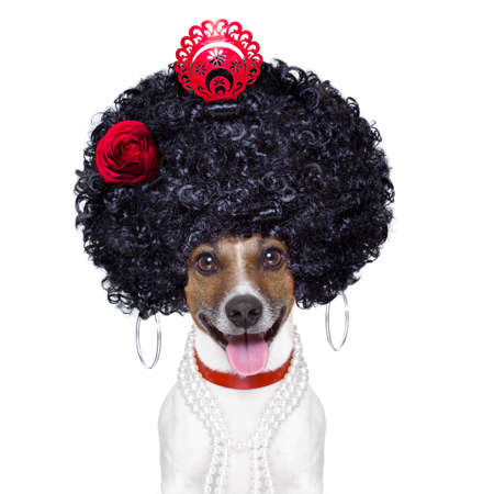 spanish flamenco dog with very big curly hair and big smile photo