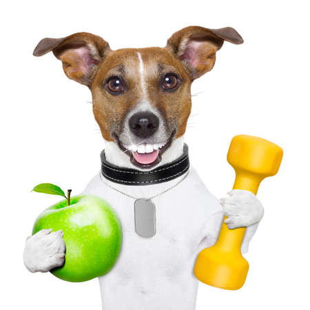 healthy dog with a big smile and a green apple Stock Photo