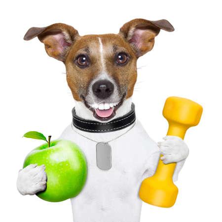 fitnes: zdrowy pies z wielkim uśmiechem i zielone jabłko
