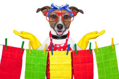 clean home: huisvrouw hond met open armen, blij om te helpen Stockfoto