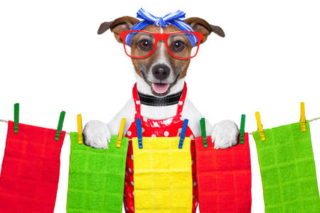 housewife dog  with open arms , happy to help Stock Photo - 20679860