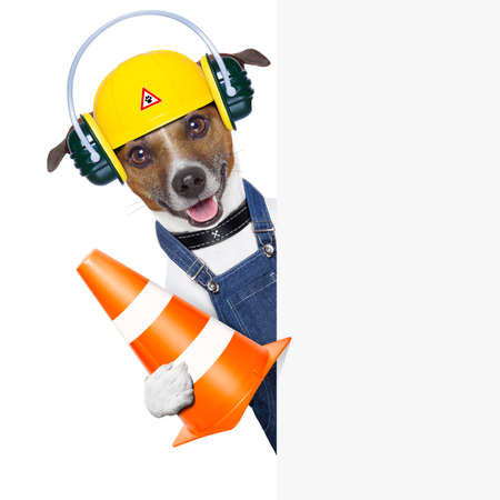 funny under construction dog with a traffic cone