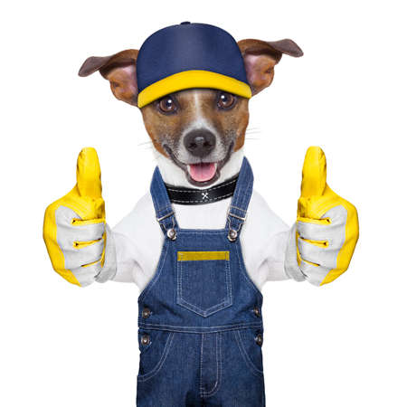 craftsman dog with two thumbs , happy to help Stock Photo - 20679868