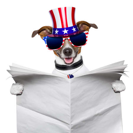 independence day: american dog reading a big blank newspaper Stock Photo