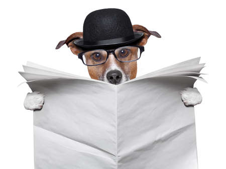 British dog reading a big blank newspaper Stock Photo - 20679875