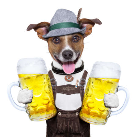 octoberfest: oktoberfest dog with two  beer mugs ,smiling happy