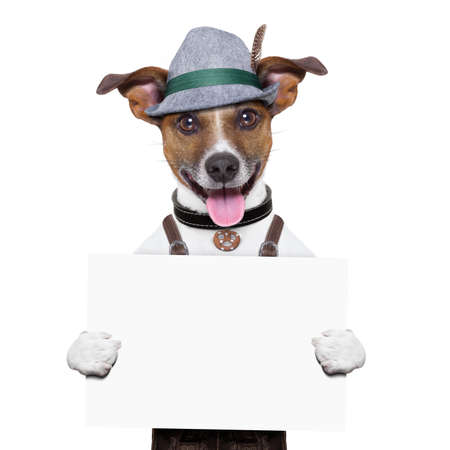 oktoberfest dog withtwi  beer mugs ,smiling happy holding a placard Stock Photo - 20900111