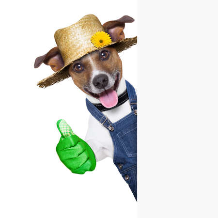 gardener: happy gardener dog with thumb up behind a placard