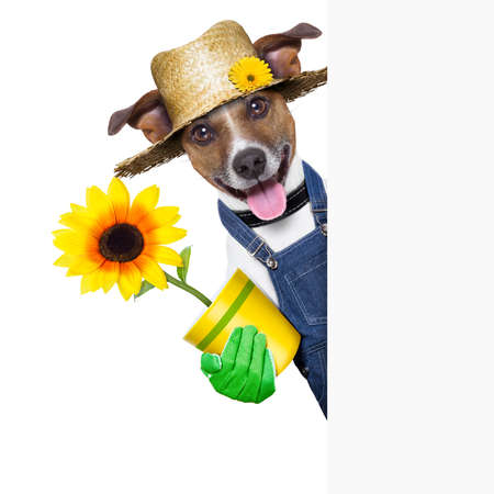 happy gardener dog with a flower behind a placard photo