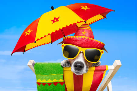 mexikanischer Hund in den Urlaub entspannt auf einem Liegestuhl unter einem Sonnenschirm