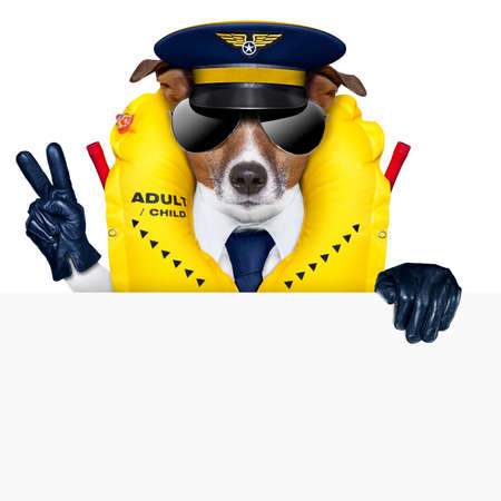 safety: pilot captain dog wearing  emergency life vest behind a placard with peace fingers