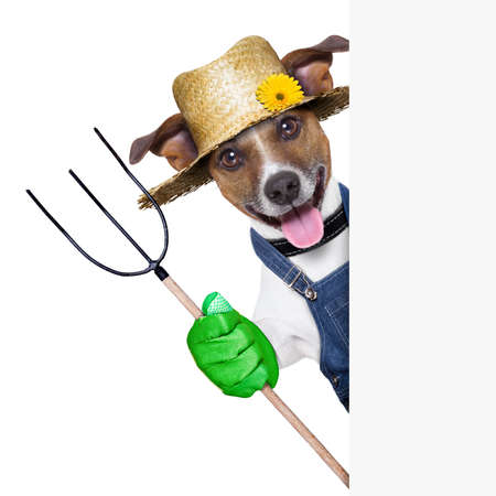 happy farmer dog with thumb up holding a pitchfork behind a placard Stock Photo - 21089328
