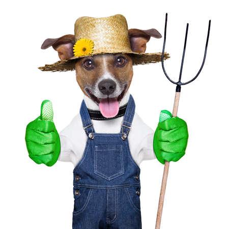 giardinieri: cane contadino felice con il pollice in su in possesso di un forcone