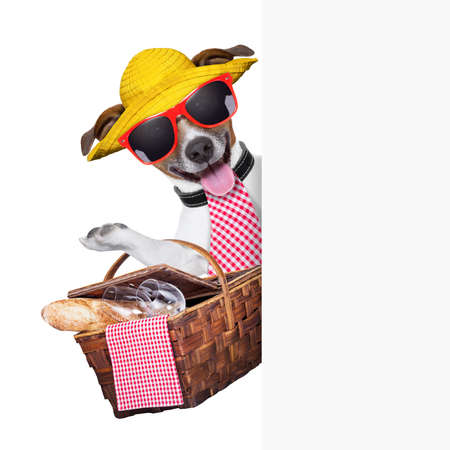 picknick: picnic dog behind placard with basket and bread
