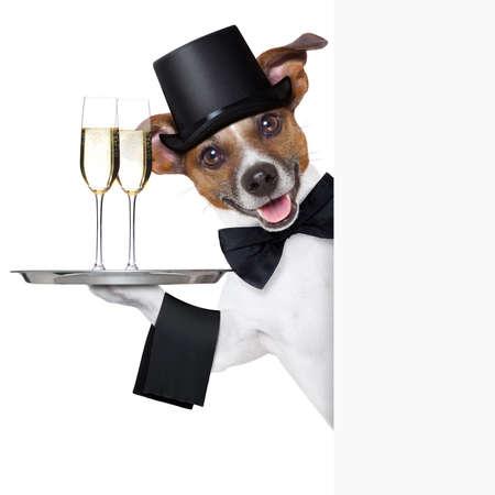 犬の白のプラカードの背後にあるサービス トレイと乾杯 写真素材