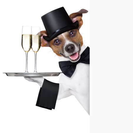 dog toasting with service tray behind  a white placard photo