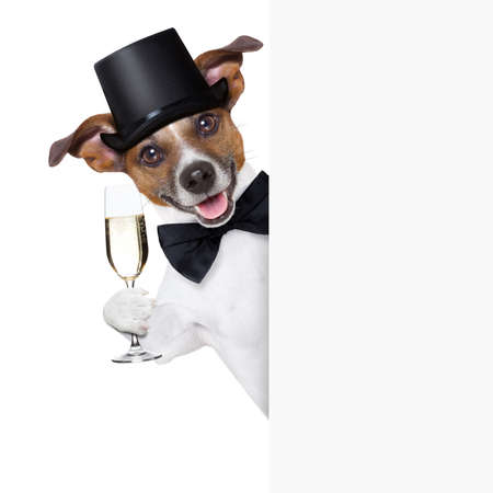 dog toasting with champagne glass behind  a white placard photo