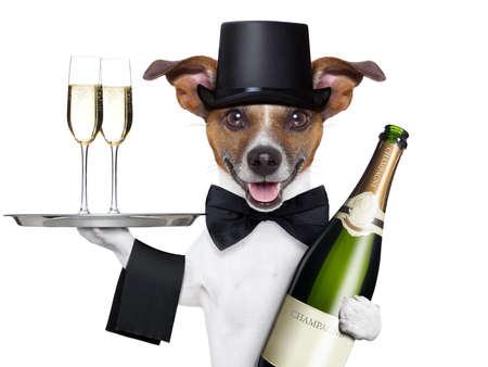 hond roosteren oudejaarsavond met champagne en service dienblad Stockfoto