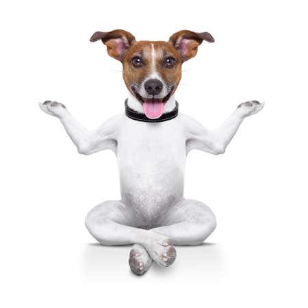 幸せそうな顔でリラックスして座ってヨガ犬