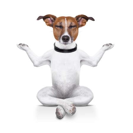 目を閉じてリラックスして座ってヨガ犬