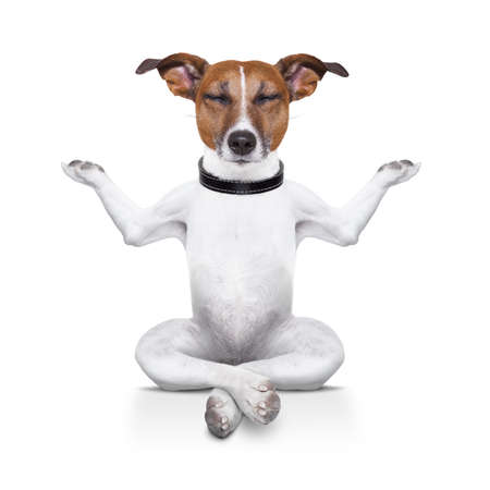 yoga dog sitting relaxed with closed eyes photo