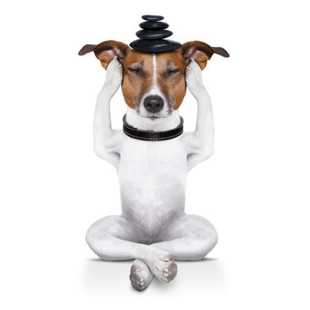 yoga dog sitting relaxed with closed eyes thinking deeply photo