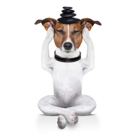glädje: yoga hund sitter avslappnad med slutna ögon tänker djupt