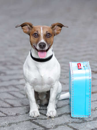 holiday pets: vacation dog waiting outside ready to depart with luggage Stock Photo
