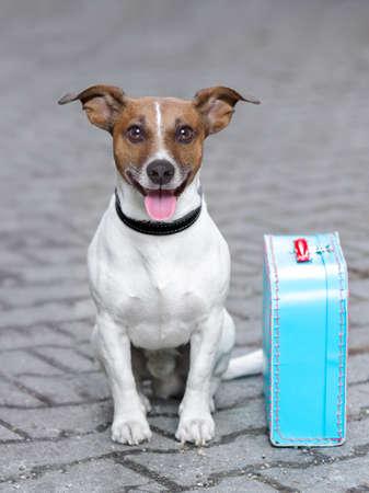 reizen: vakantie hond wachten buiten klaar om te vertrekken met bagage