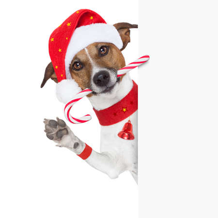 christmas dog as santa behind placard with sugar candy cane photo