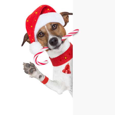 dog christmas: christmas dog as santa behind placard with sugar candy cane