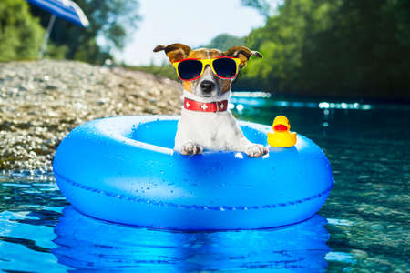 dog on  blue air mattress  in water refreshing 스톡 콘텐츠
